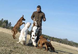 Amir med hundar